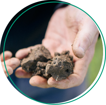 Soil health L-cbf boost biostimulants