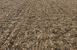 Cover crops improve drilling conditions