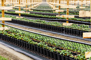 New pot and tray solution helps reduce soil-borne disease transmission