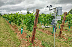 Accurate forecasting helps secure UK vine crops