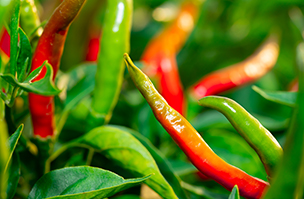 Chilli growing challenge